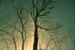 Nacht in einem nebelhaften Wald Stockfotografie