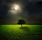 Nacht en de maan stock foto's