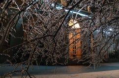 Nacht en ijs op bomen Stock Afbeeldingen