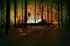 Nacht in het hout Royalty-vrije Stock Afbeeldingen