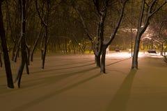 Nacht in het park Royalty-vrije Stock Foto's