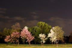 Nacht in het park royalty-vrije stock afbeelding