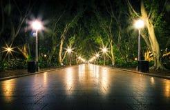 Nacht in het park Stock Afbeelding