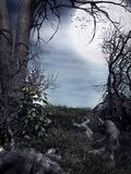 Nacht im Wald Stockbild