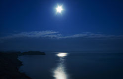 Nacht. Kap-Chamäleon unter dem Mond. Krim. Lizenzfreies Stockfoto