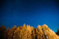 Nacht Sterrige Hemel boven Autumn Trees In Forest Glowing-Sterren Abo royalty-vrije stock foto's