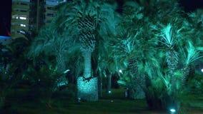 Nacht tropisch park met palmen in de toevluchtstad met nachtverlichting 4K stock video