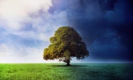 Nacht- und Tagesszene mit Baum