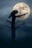 Nacht van de kraaien Stock Afbeeldingen