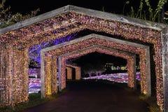 Nacht van het festivalkorea van de Illumia de Lichte Verlichting stock fotografie