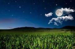 Nachtachtergrond Stock Fotografie