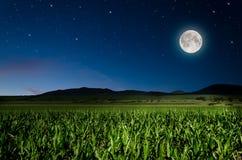 Nachtachtergrond Royalty-vrije Stock Afbeelding