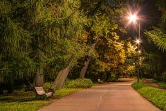 Nachtansicht der Gasse im Park Lizenzfreie Stockbilder
