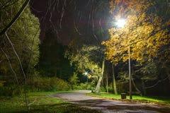 Nachtansicht der Straße im Park Stockbild