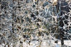 Nachtansicht des Winterparks Lizenzfreie Stockfotos