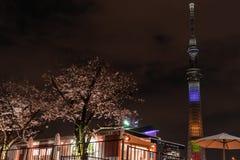 Nachtansicht von Tokyo Skytree mit Cherry Blossom entlang Sumida-Flussbank lizenzfreie stockfotografie
