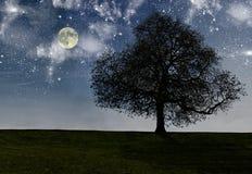 Nachtbaum Lizenzfreies Stockbild