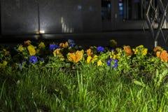 Nachtbeeld van een bloemengezoem dat door een reflector wordt verlicht stock afbeelding