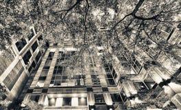 Nachtbezinningen in stadswolkenkrabber met bomen bij nacht Royalty-vrije Stock Foto