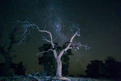 Nachtboom Stock Afbeeldingen