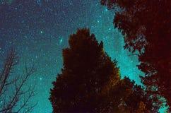 Nachtboom met melkachtige manier stock afbeeldingen