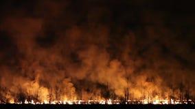 Nachtbrand op een gebied stock videobeelden