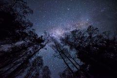 Nachtfoto van de hemel en de silhouetten van bomen Stock Foto's