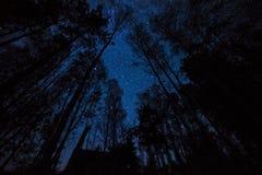 Nachtfoto van de hemel en de silhouetten van bomen Royalty-vrije Stock Fotografie