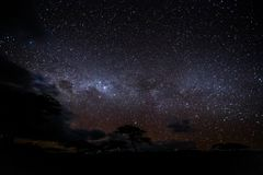 Nachtfoto van sterren met bomen vooraan stock foto