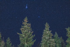 Nachthemel en bomen Stock Foto