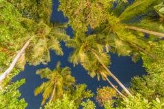 Nachthemel en palmen, die op conceptenachtergrond kijken stock foto