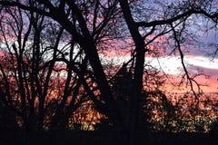 Nachthemel hoewel bomen Stock Foto