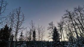 Nachthemel met Crescent Moon in Bos Stock Afbeeldingen