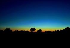 Nachthintergrund mit Baumschattenbildern Lizenzfreies Stockbild