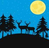 Nachtholz mit wilden Rotwild Stockfotografie