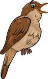 Nachtigallvogel-Karikaturillustration Stockfotos