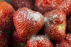 Nachtisch von Erdbeererdbeeren im Puderzucker Stockbild