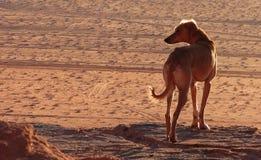 Nachtischhund Stockfoto