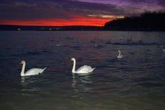 Nachtküstenansicht Lizenzfreie Stockbilder