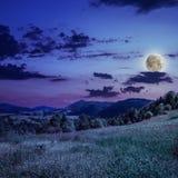 Nachtkoniferenwald auf einem steilen Berghang Lizenzfreie Stockfotografie