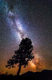 Nachtlandschaft eines Schattenbildes eines Baums auf die Oberseite des Hügels stockfoto