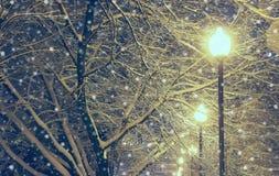 Nachtlandschaft im Winterpark Lizenzfreie Stockfotografie