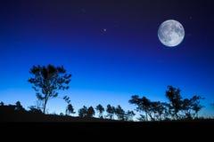 Nachtlandschaft mit dem Mond, Baumschattenbild, spielt die Hauptrolle Stockfotografie