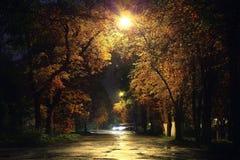 Nachtlandschap in het park met bomensteeg stock foto