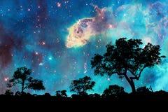 Nachtlandschap met bomen en sterrige nacht royalty-vrije stock afbeelding