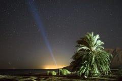 Nachtlandschap met palmen en sterren Stock Afbeelding