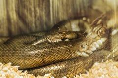 Nachtmerrie van slang Stock Afbeelding