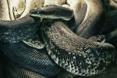 Nachtmerrie van slangen Stock Afbeeldingen
