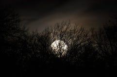 Nachtmysteriöse Landschaft in den kalten Tönen - Schattenbilder der bloßen Baumaste gegen den Vollmond und die drastische bewölkt Lizenzfreie Stockfotografie