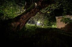 Nachtnebel im Dorf geheimnisvoll Mondschein Beleuchten herauf Schwingen nahe dem Baum im Yard Das Licht von der Rückseite von Bäu stockfoto